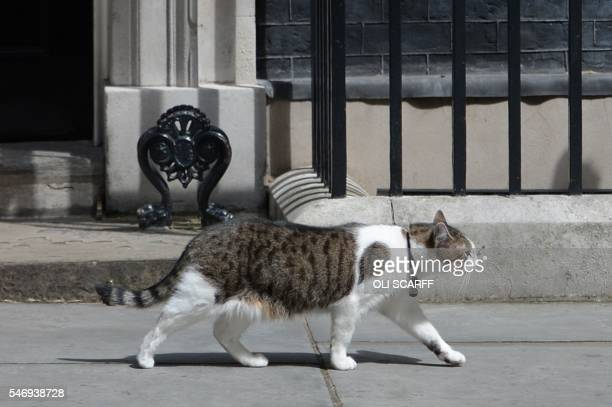 Larry the 10 Downing Street cat prowls outside the door of number 10 Downing Street in London on July 13 as Prime Minister David Cameron prepares to...
