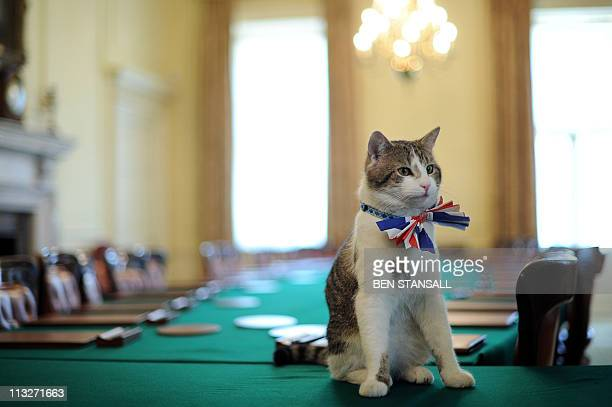 Larry the 10 Downing Street cat sits on the cabinet table wearing a British Union Jack bow tie ahead of the Downing Street street party in central...