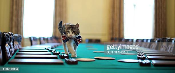 Larry the 10 Downing Street cat walks on the cabinet table wearing a British Union Jack bow tie ahead of the Downing Street street party in central...