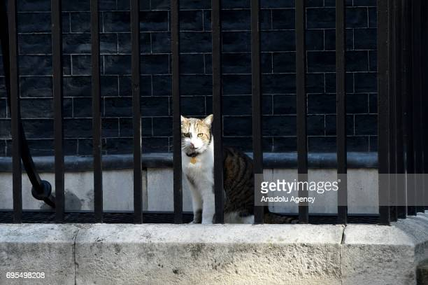 Larry the Cat sits at Downing Street in London United Kingdom on June 13 2017 The Prime Minister has reshuffled her cabinet after the snap general...