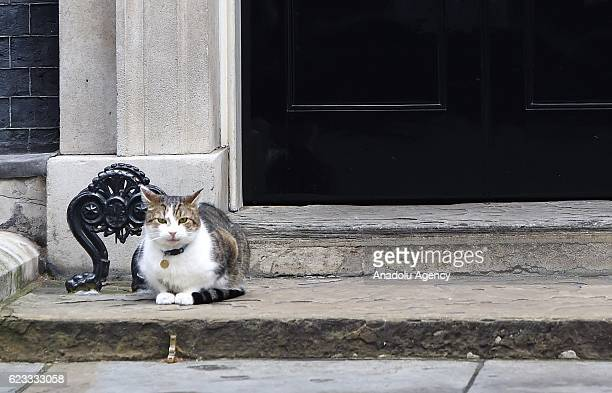 Larry the cat sits on the steps at No10 Downing street after British prime minister Theresa May's weekly cabinet meeting in London England on...