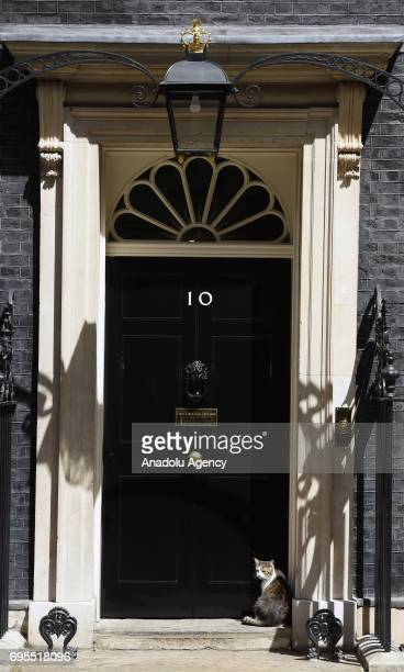 Larry the Cat sits on the steps of Downing Street on June 13 2017 in London United Kingdom The Prime Minister has reshuffled her cabinet after the...