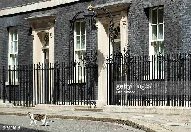 Larry the cat walks in front of 10 Downing street on David Cameron's last day as the UK's Prime Minister on July 13 2016 in London England David...