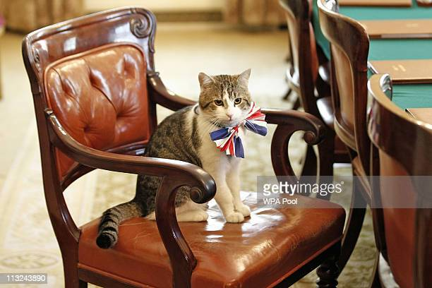 Larry the Downing Street cat gets in the Royal Wedding spirit in a Union flag bowtie in the Cabinet Room at number 10 Downing Street on April 28 2011...