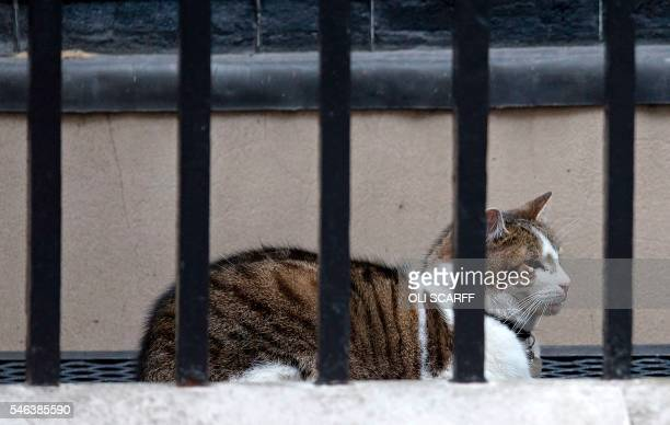 Larry the Downing Street cat is pictured outside 10 Downing Street in London on July 12 2016 David Cameron chaired his final cabinet meeting on...