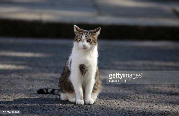 Larry the Downing Street Cat is pictured outside 10 Downing Street in London on July 19 as Prime Minister Theresa May chairs her first Cabinet...