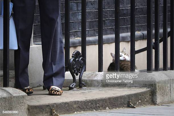 Larry the Downing Street cat looks up from his slumber as Leader of the Conservative party Theresa May arrives for David Cameron's last cabinet...