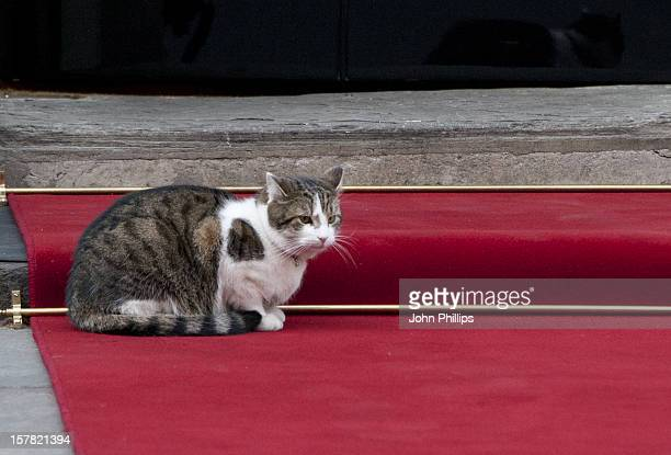 Larry The Downing Street Cat Outside Number 10 Downing Street In Central London