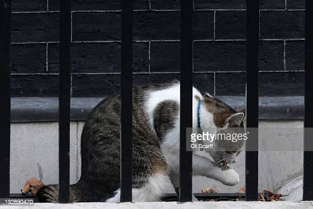 'Larry' the Downing Street cat outside Number 10 on November 15 2011 in London England Fouryearold Larry who came from Battersea Dogs and Cats Home...