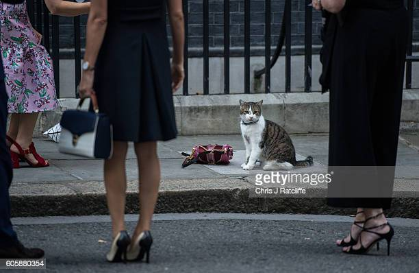 Larry the Downing Street cat sits next to a handbag as fashion industry people take photos of him outside number 10 Downing Street when arriving for...