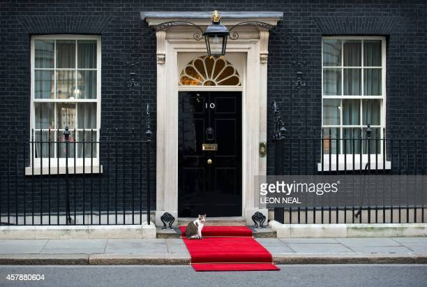 Larry the Downing Street cat sits on the red carpet outside number 10 Downing Street in central London on January 16 2012 AFP PHOTO / LEON NEAL