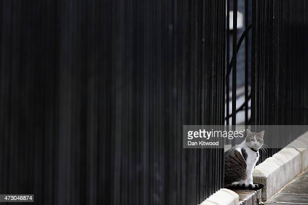 Larry the Downing Street cat sits on the step during the first weekly cabinet meeting in Downing Street on May 12 2015 in London England Conservative...