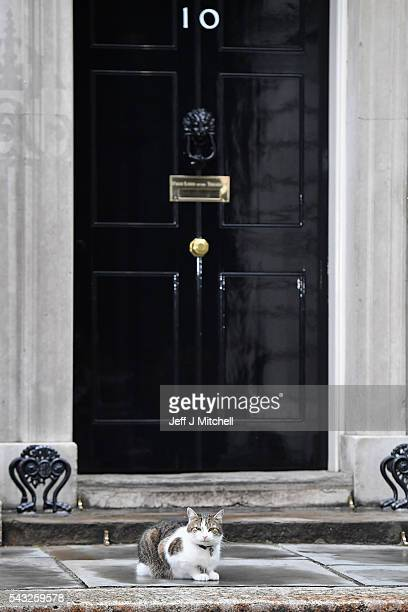 Larry the Downing Street cat sits outside number ten Downing Street on June 27 2016 in LondonEnglandChancellor George Osborne will today issue a...