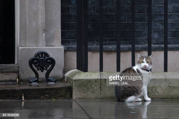 Larry the Downing Street cat sits outside the door of 10 Downing Street the official residence of British Prime Minister Theresa May in central...