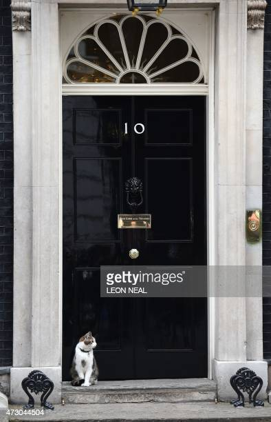 Larry the Downing Street cat sits outside the door of No 10 Downing Street in central London on May 12 ahead of the first Cabinet meeting after the...