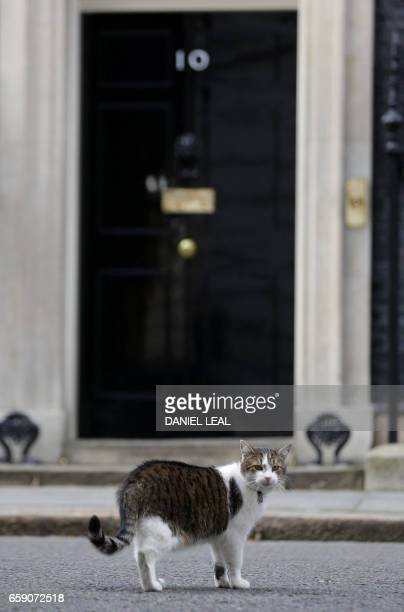 'Larry' the Downing Street cat walks in the road outside number 10 the official residence of Britain's Prime Minister Theresa May in central London...