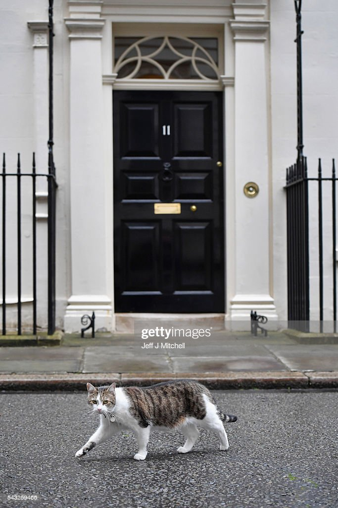 Larry the Downing Street cat walks past number eleven on June 27, 2016 in London,England.Chancellor George Osborne will today issue a statement in a bid to calm the financial markets amid the uncertainty sparked by the UK voting to leave the EU.