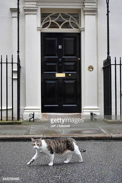 Larry the Downing Street cat walks past number eleven on June 27 2016 in LondonEnglandChancellor George Osborne will today issue a statement in a bid...