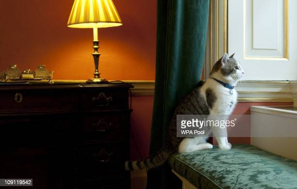 'Larry' the new Downing Street cat gazes through a window of Number 10 Downing Street on February 15 2011 in London England It is hoped that British...