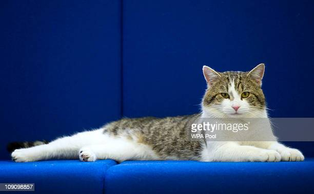 'Larry' the new Downing Street cat pictured at Battersea Dogs and Cats Home in London before being taken to the Prime Ministers residence on February...