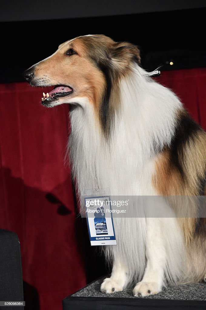 Lassie attends 'Lassie Come Home' during day 2 of the TCM Classic Film Festival 2016 on April 29, 2016 in Los Angeles, California. 25826_006