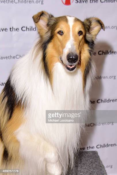 Lassie attends the 2nd Annual Save The Children Illumination Gala at the Plaza on November 19 2014 in New York City