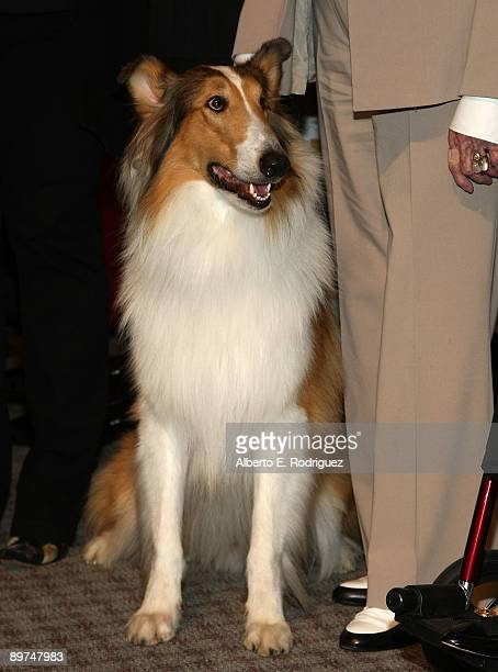 Lassie attends the Early TV Memories FirstClass stamp dedication ceremony held at the Academy of Television Arts and Sciences on August 11 2009 in...