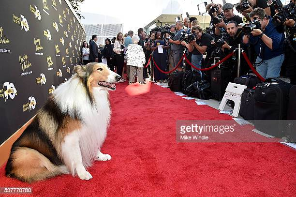Lassie attends the Television Academy's 70th Anniversary Gala on June 2 2016 in Los Angeles California
