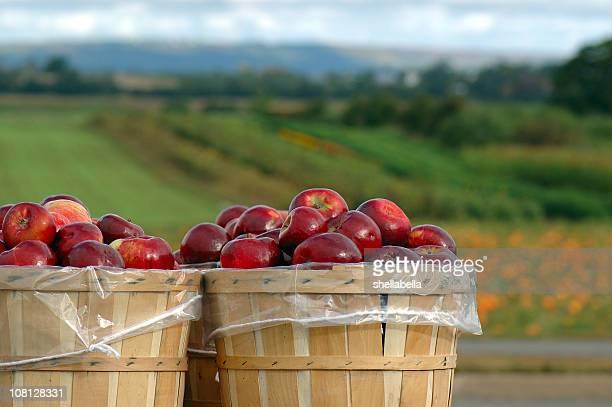 last stop to applesauce