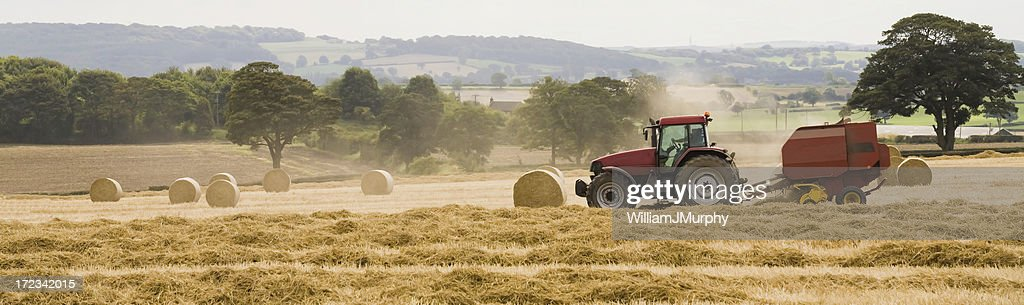 Last Straw (farming, agriculture, harvest) : Stock Photo