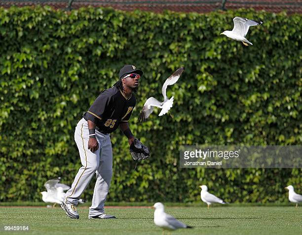 Lastings Milledge of the Pittsburgh Pirates is surrounded by seagulls in left field in the 9th inning of a game against the Chicago Cubs at Wrigley...