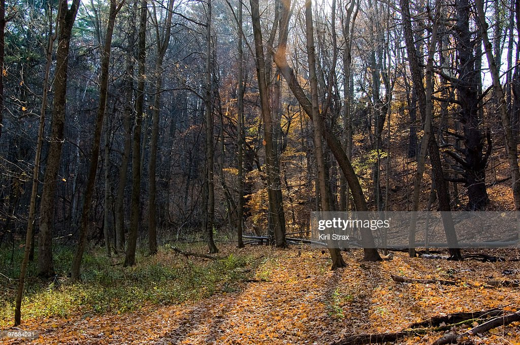 Late fall in Bronte Creek forest