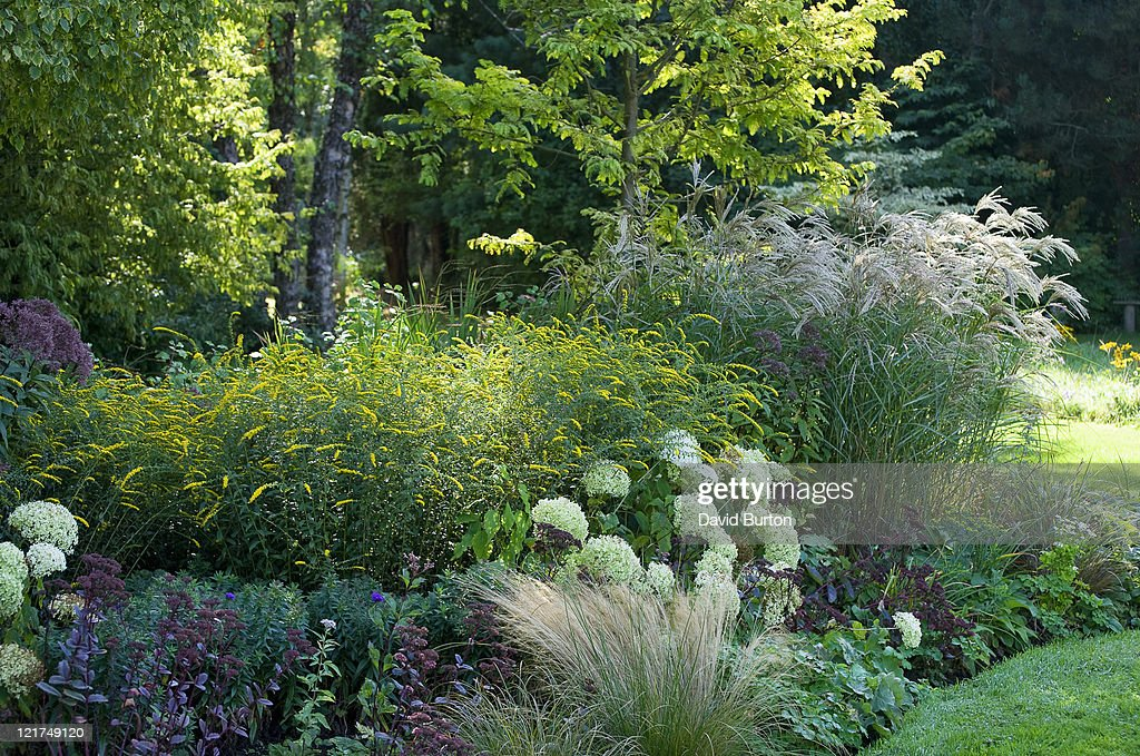 Late summer border with mixed shrubs and perennials, September