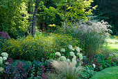 Late summer border with mixed shrubs and perennials, September