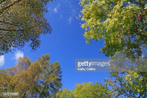 Late summer woodland trees, Scotland, UK : Stock Photo