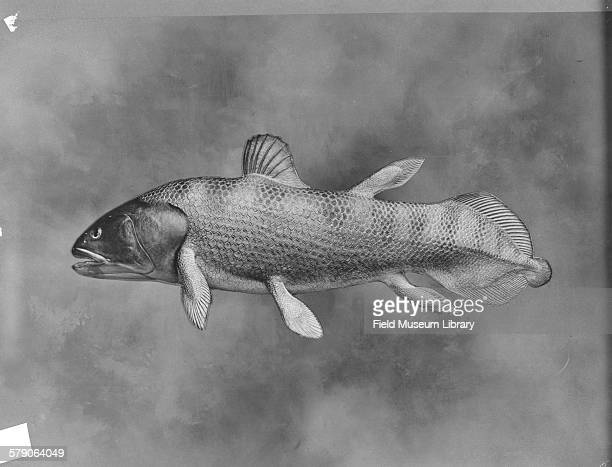 Latimeria chalumnae Coelacanthidae family Discovered in 1938 Living example Model on wood block in progress by Leon L Pray