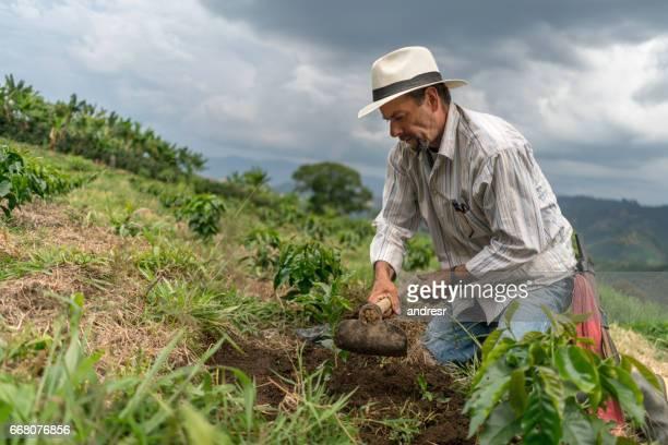 Latin American farmer planting a tree at the farm