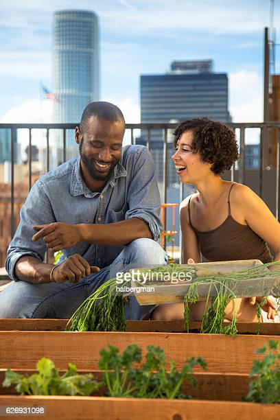 Laughing Couple Picking Vegetable in Urban Garden
