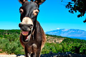 """""""A donkey laughing in the backlands of Ithaka, an Ionian greek Island. The picture shows the beauty of nature with blue sky, green fields and a charming mammal and a charismatic smile."""""""