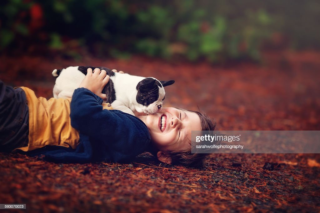 Laughing little boy with french bulldog puppy : Stock Photo
