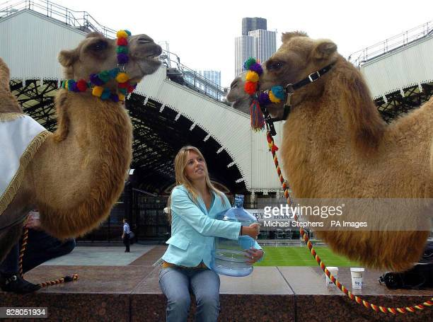 Laura Brooks from Southampton makes friends with two camels as she helps launch an initiative to encourage UK businesses to cut down on the amount of...
