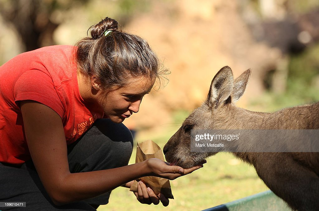 Laura Robson of Great Britain feeds a kangaroo on a visit to Bonorong Wildlife Sanctuary during day two of the Hobart International at Domain Tennis Centre on January 5, 2013 in Hobart, Australia.