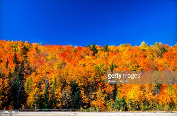 Laurentian forest in autumn (fall), North of Montreal, Quebec - Canada