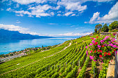 Beautiful scenery with vineyard terraces in famous Lavaux wine region, UNESCO World Heritage Site since 2007, overlooking the northern shores of Lake Geneva, Canton of Vaud, Switzerland.