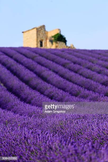 Lavendel Feld bei Sonnenuntergang