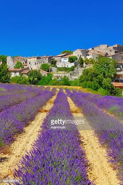Champ de lavande avec une petite ville en Provence