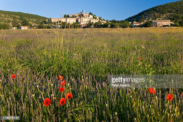 Lavender field with poppies, Banon village, Provence, France