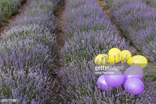 Lavender field with yellow and purple baloons