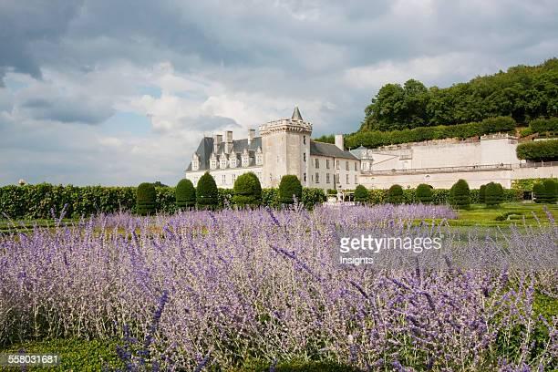 Lavender Flowers In The Gardens Of The Chateau De Villandry Villandry IndreEtLoire France