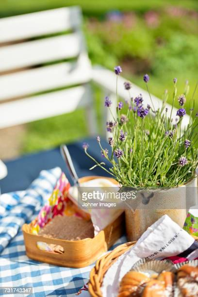 Lavender in pot on table
